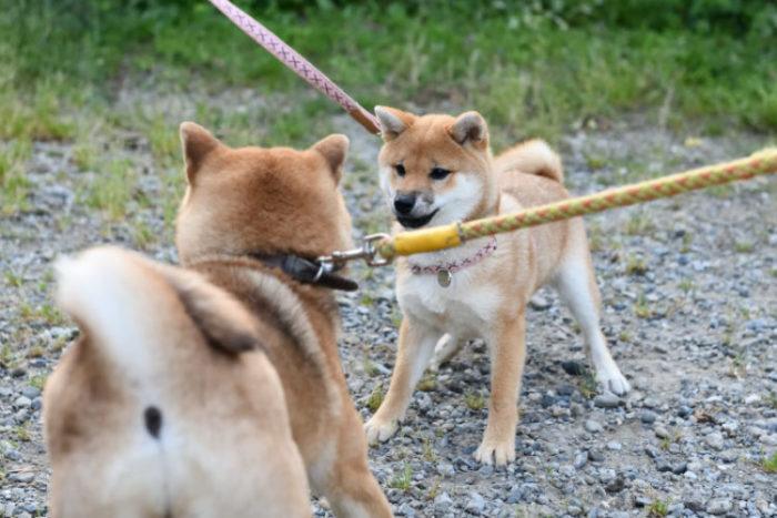 母親と遊ぶ柚子ちゃん1