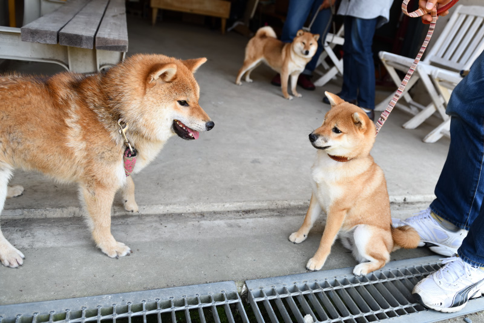 柴犬浜ちゃんと柚子ちゃん