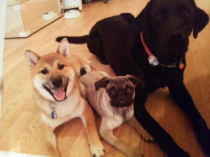 犬の幼稚園のお友達