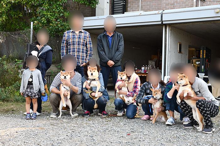 柴犬の集合写真