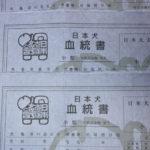 【赤柴美里の子】日本犬保存会血統書です♪