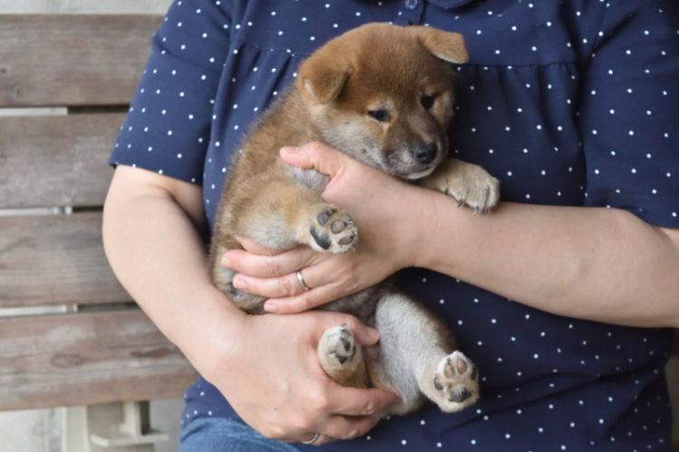 子犬を抱っこ