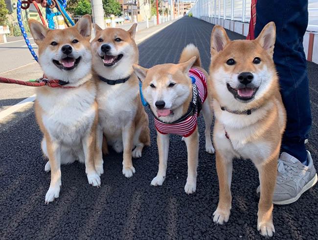 犬の幼稚園のお友達?