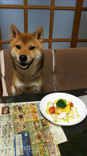 飼い主様からお誕生日を祝われる柴犬夢作心君