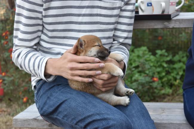 飼い主様に抱っこされるキキちゃん