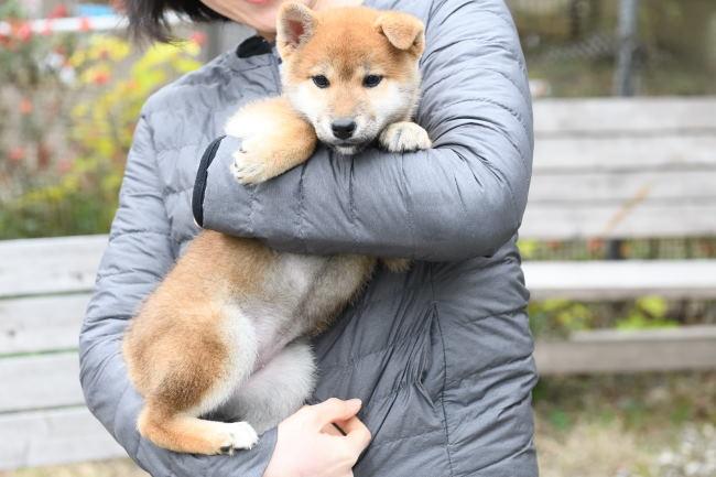 飼い主様に抱っこされる陽ちゃん