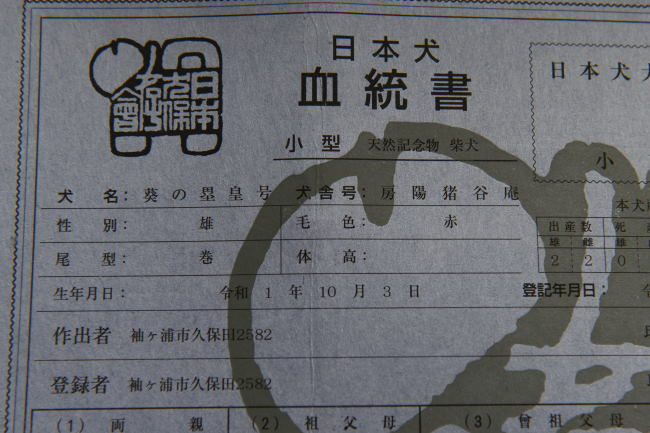 日本犬保存会の柴犬の血統書