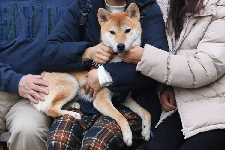 飼い主様と柴犬きなこ君の写真